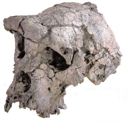 homo neanderthalensis kenmerken
